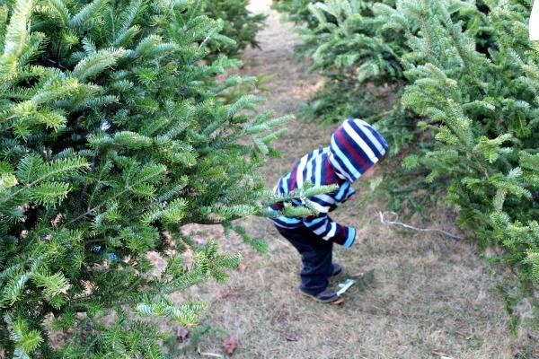 tree day 9