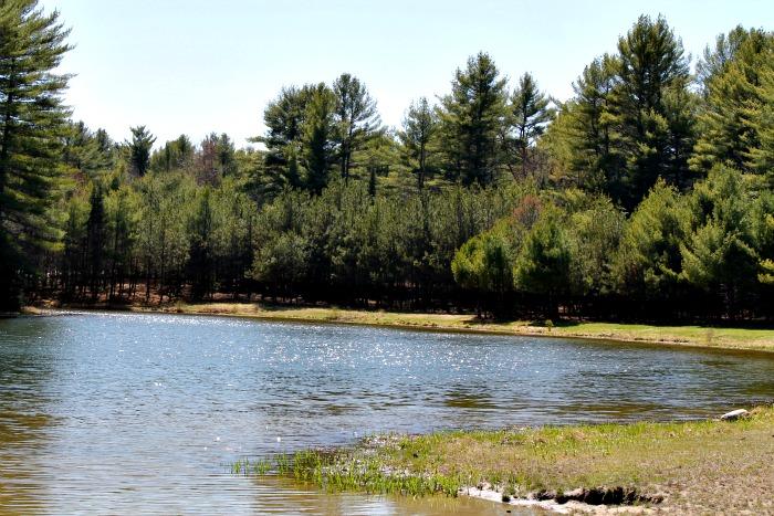beaver park 3