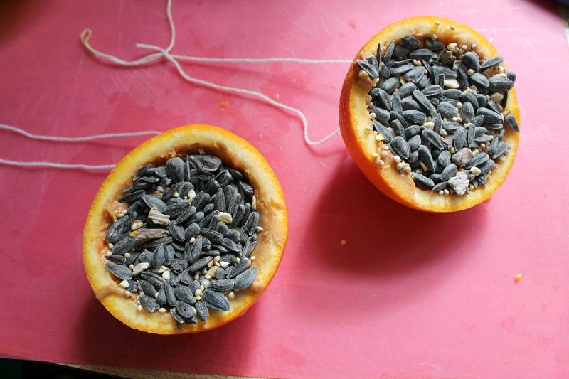 orange bird feeders 5