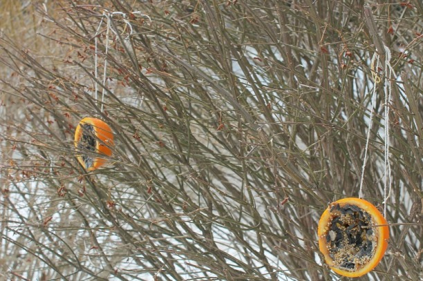 orange bird feeders 7