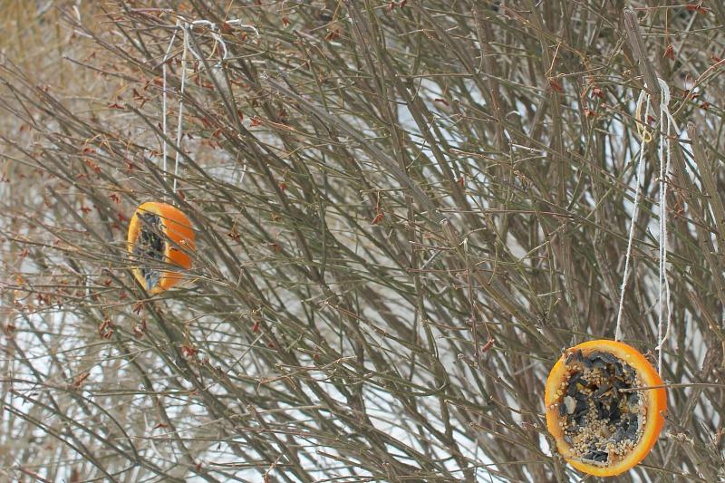 orange bird feeders 7
