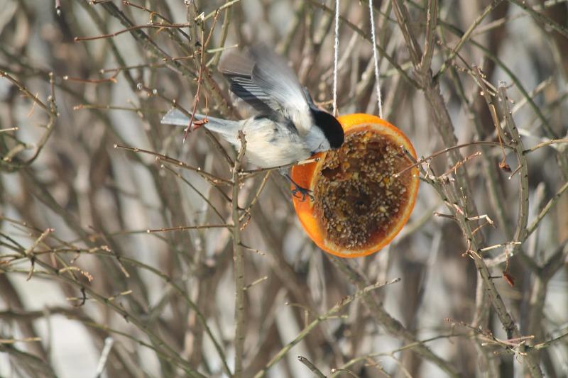 orange bird feeders 8